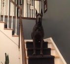 Great Dane Stairs Modern Decor Entryway