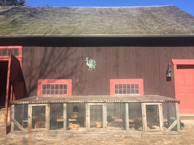 Butternut Farms, Butternut Farms Bed and Breakfast, Bed and Breakfast, Bed and Breakfast CT, B&B CT, B and B CT, Butternut Farms CT, Butternut Farms B and B, Butternut Farms Inn, Connecticut Travel, CT Travel, Connecticut Lodging, CT Lodging, Charming Inn, Charming B and B, Converted Barn, Converted Connecticut Barn, Old Home, 1720 House, Goats, Farm, Connecticut Farm, Farm Fresh Eggs, Chickens, Nature