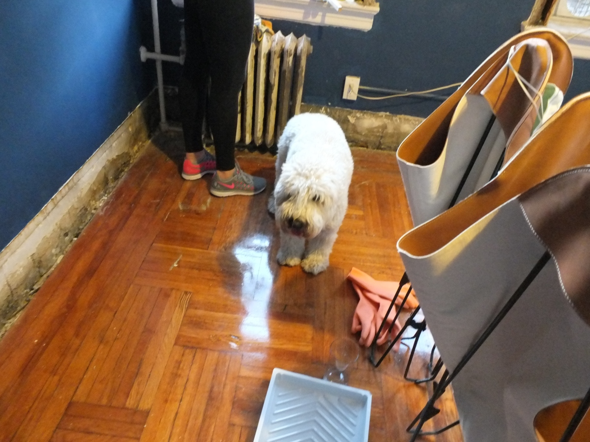 American Radiator Co, pre-war Radiator, Pre-War Heating, Heating, Radiator, Radiators, Refinishing Radiators, Stripping Radiator, Details, Pre-War Details, Historic Architectural Details, historic Design details, 1920s interiors, soft coated wheaten terrier,
