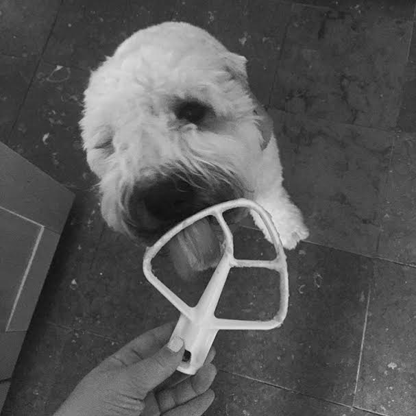 Brantly, Soft Coated Wheaten, Soft Coated Wheaten Terrier, Dog Birthday, Kitchen Aid, Baking, Black and White, Puppy Pictures, Second Birthday Party, Crazy Dog Lady,