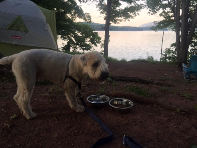 camping, tent camping, tents, lake, vacation, pennsylvania, summer vacation, weekend getaway, memories, making memories, raystown lake, dogs, dog life, camping with dogs, wheaten terrier, brantley bub,