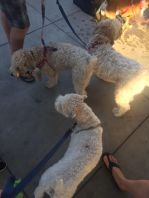 camping, tent camping, tents, lake, vacation, pennsylvania, summer vacation, weekend getaway, memories, making memories, Pittsburgh, PNC Park, Pup Night at the Park, Pup Night, Baseball Game, wheaten terrier, wheaten terriers, wheatens of pittsburgh, wheaten greatin,