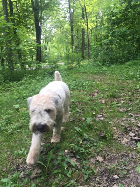 camping, tent camping, tents, lake, vacation, pennsylvania, summer vacation, weekend getaway, memories, making memories, keystone state park, wheaten terrier, camping with dogs, brantley bub,