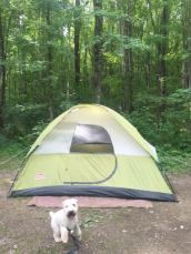 camping, tent camping, tents, lake, vacation, pennsylvania, summer vacation, weekend getaway, memories, making memories, keystone state park, wheaten terrier, camping with dogs, brantley bub